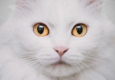 Naklejka biały kot