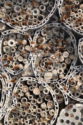 Bienenhotel mit Mauerbienen