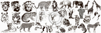 Naklejka Big collection of wild animals. Exotic danger African. Tropical. Vector illustration on white background.