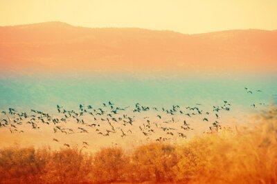 Birds against the background of the mountains in the evening. The Hula Valley in northern Israel at sunset