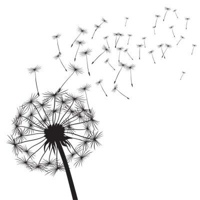 Naklejka Black vector dandelions