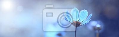 Naklejka Blue beautiful flower on a beautiful toned blurred background, border. Delicate floral background, selective soft focus.