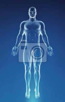 Naklejka Blue Human Anatomy Body