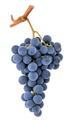 Naklejka Blue purple dark wine grape bunch isolated on white background as detail for packaging design