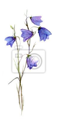 Bluebell kwiat