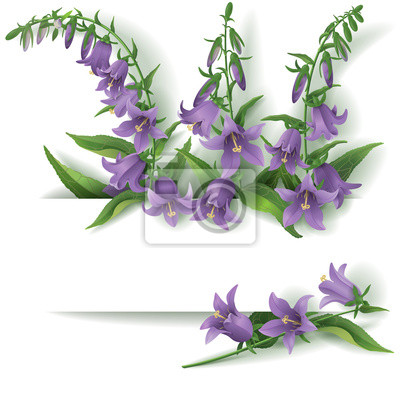 Bluebell kwiaty