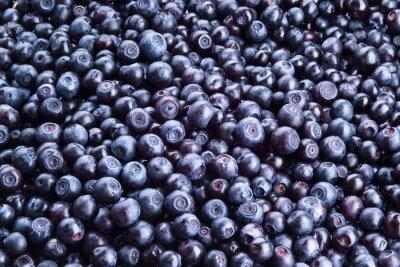 Naklejka Blueberry tło. Świeżo zebranych jagód