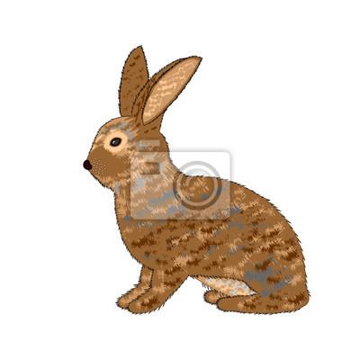 Naklejka Boczne z królika na białym tle