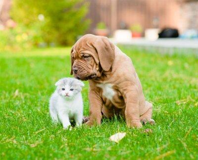 Naklejka Bordeaux szczeniak wąchania noworodka kotek na zielonej trawie