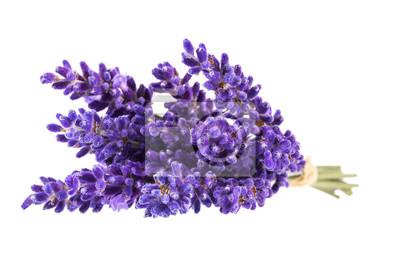 Naklejka Bouguet fioletowe kwiaty lawendy na białym tle, z bliska
