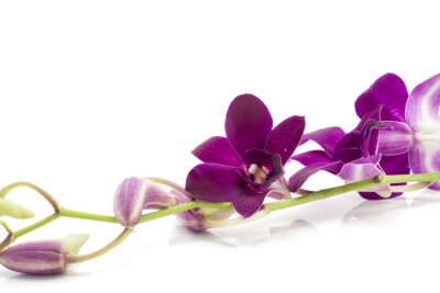Naklejka Branch blooming purple orchid