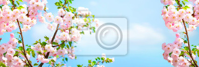 Naklejka Branches blossoming cherry on background blue sky and white clouds in spring on nature outdoors. Pink sakura flowers, amazing colorful dreamy romantic artistic image spring nature, banner format.