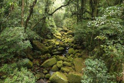 Naklejka Brazylia lasy deszczowe - Serra dos Orgaos