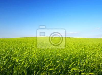 Bright łąka i niebo. Fresh skład lato