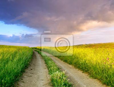 Naklejka Bright łąka i niebo. Fresh skład lato