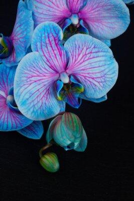 Naklejka Bukiet fioletowych storczyków