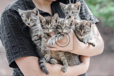 Naklejka bunch of tabby kittens in female hands