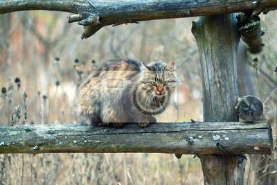 Cat lokalizacji na płocie