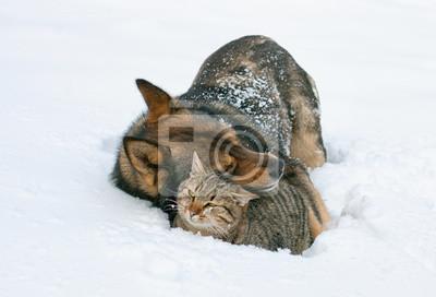 Cat przytulanie Pies w śniegu