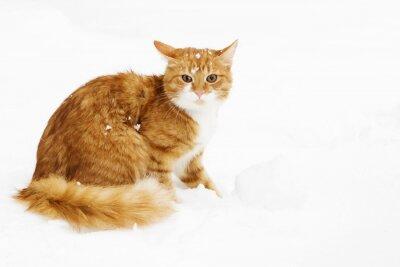 Naklejka Cat śnieżna zima