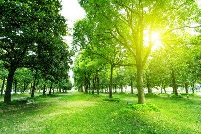 Naklejka chodnik i drzewa w parku