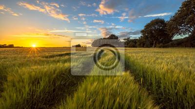 Naklejka Ciągnik Śledź przez pole pszenicy o zachodzie słońca
