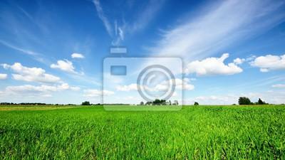 Naklejka classic rural landscape. Green field against blue sky