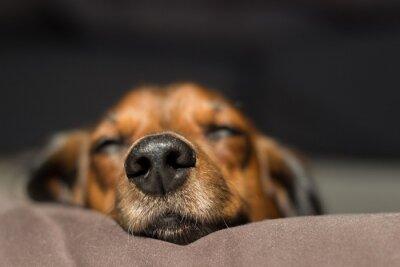 Naklejka Close-up Of Dog