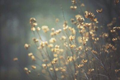 Naklejka Close-up Of Dry Flowers On Field