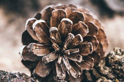 Naklejka Close-up Of Pine Cone