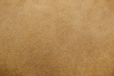 Naklejka close up of real lion fur texture