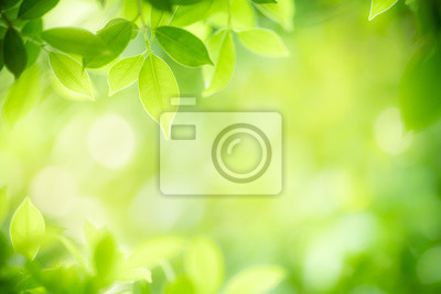 Naklejka Closeup nature view of green leaf on blurred greenery background in garden with copy space for text using as summer background natural green plants landscape, ecology, fresh wallpaper concept.