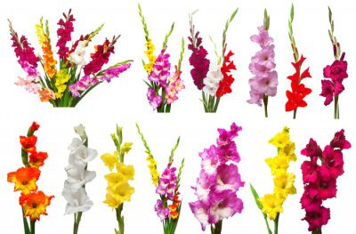 Naklejka Collection gladiolus flowers isolated on white background. Yellow, red, pink, orange, green. Flat lay, top view
