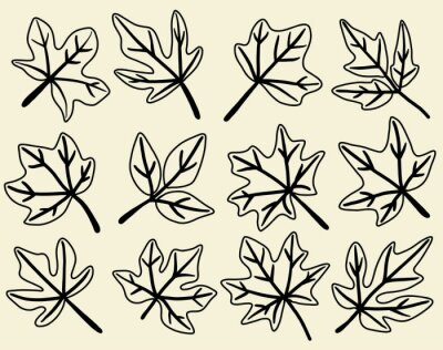 Naklejka Collection of simplicity maple leaf freehand drawing flat design.
