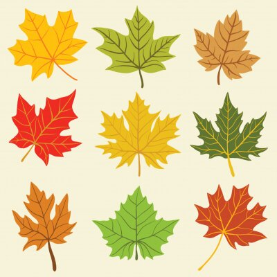 Naklejka Collection of simplicity maple leaf freehand drawing flat design. Vector illustration.