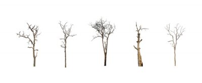 Naklejka collection of trees dead set of trees isolated on white background
