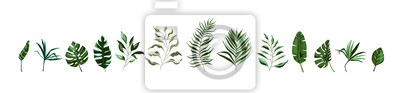 Naklejka Collection of tropical greenery leaf plant herbs leaves monstera palm