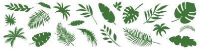 Naklejka Collection of vector green leaves. Jungle exotic tropical leaves. Elements for design