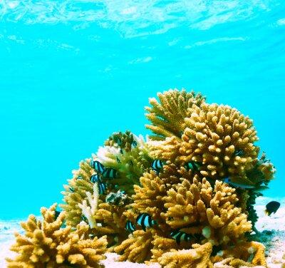 Naklejka Coral reef at Maldives