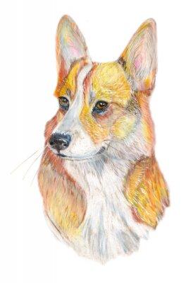 Naklejka Corgi psa / Dog ręcznie malowane akwarela ilustracji samodzielnie na białym tle