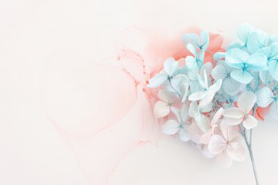 Naklejka Creative image of pastel blue and pink Hydrangea flowers on artistic ink background. Top view with copy space