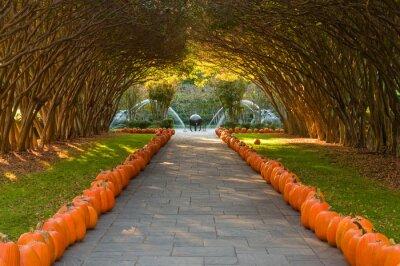 Naklejka Crepe Myrtle Alley at the Dallas Arboretum