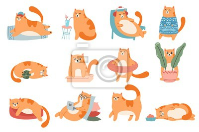 Cute cats. Cat in box, adorable red kitty sleeping and fat cat in fur sweater vector illustration set. Domestic animal lifestyle. Comic kitten in glasses working on laptop, drinking milk stickers