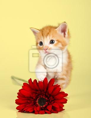 Naklejka Cute kitten toughing czerwony kwiat