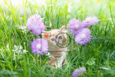 Cute little kitten siedzi w kwiaty na trawie