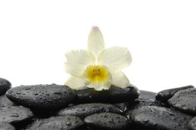 Naklejka czarne kamienie i Orchidea z refleksji