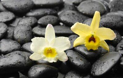 Naklejka czarne kamienie i różowa orchidea