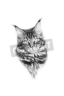 Naklejka Czarno-białe zdjęcie Kot twarz. Maine Coon.