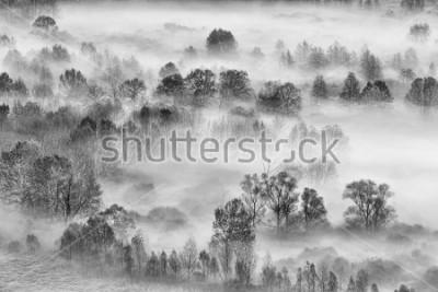 Naklejka Czarno-biały krajobraz, mglisty las, Włochy