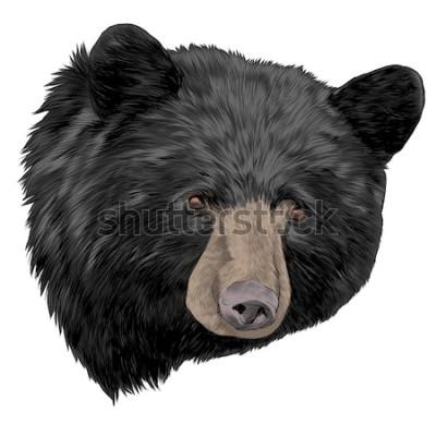 Naklejka czarny niedźwiedź szkic głowy grafiki wektorowej kolor obrazu